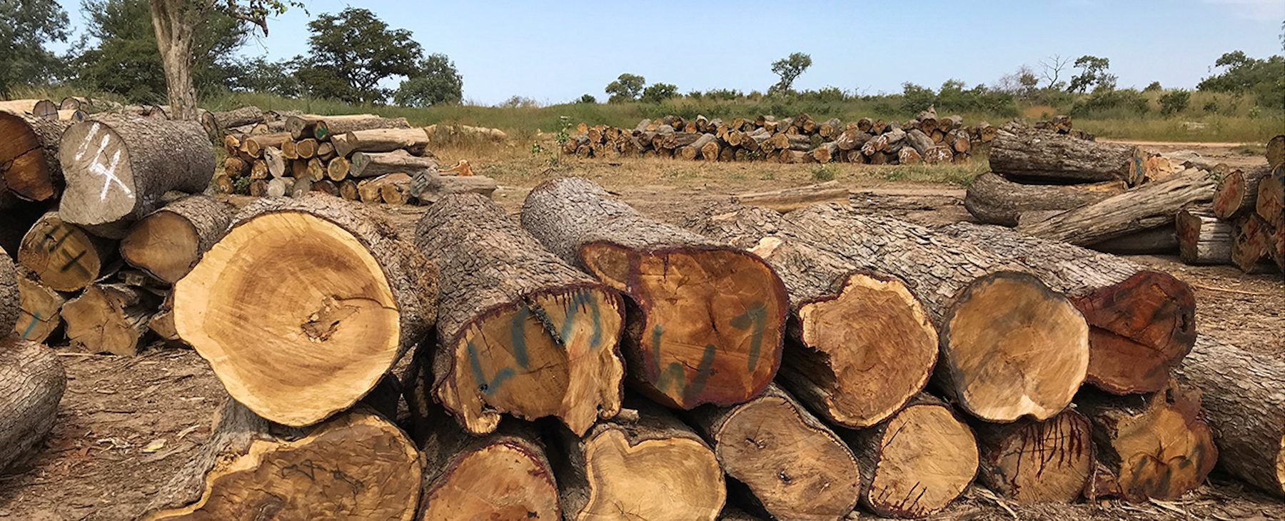 Westwood: dealing in conflict timber across The Gambia and Senegal