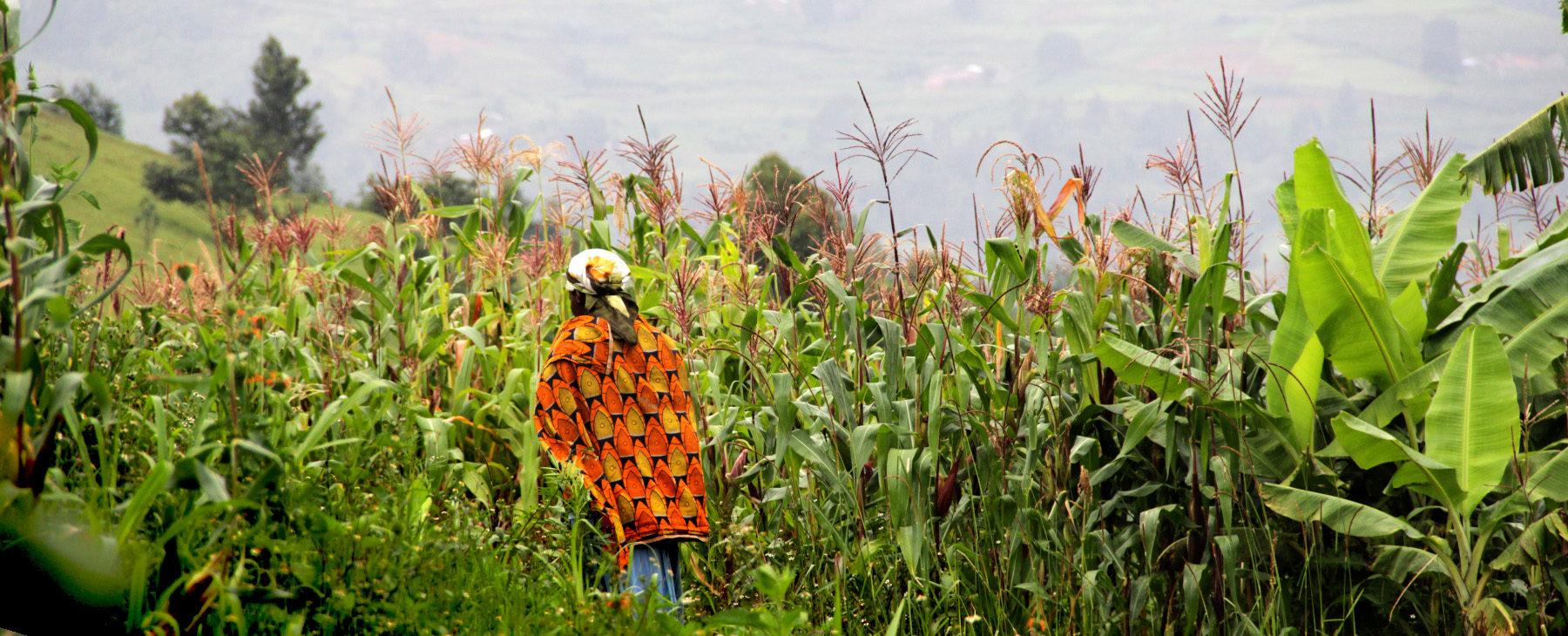 Condemnation of two Imbonerakure, an encouraging sign in Burundi?