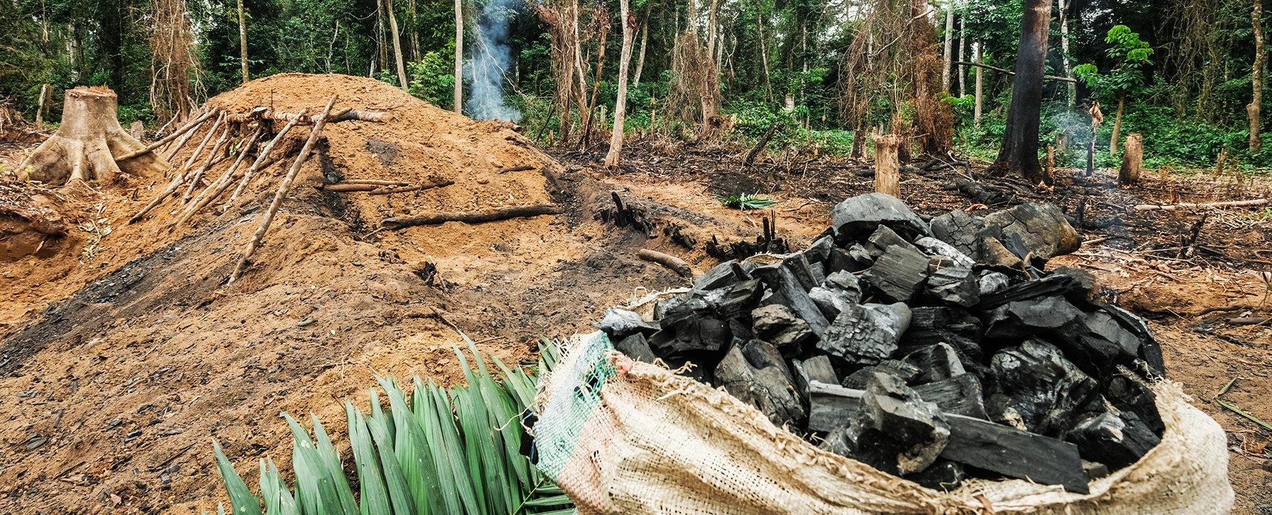 Des crimes environnementaux devant la justice du Sud Kivu (RDC)
